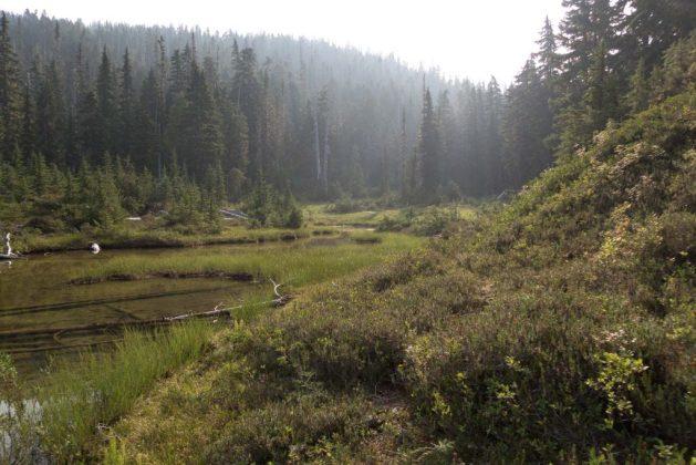 Mount Phillips, Arnica Lake, Mount PHillips