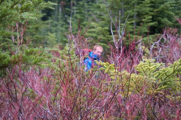 hiking to Big Tree Peak in the Prince of Wales Range
