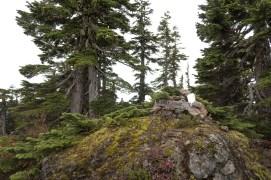 Mount Chief Frank