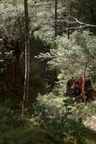 A little steep forest to deal with