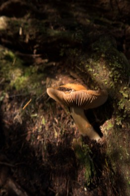 in the deepest woods we can find mushrooms.