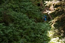 paradise-to-wood-mountain-5213