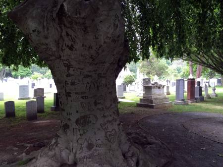 Tree at West Point Military Academy Cemetery