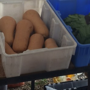 These bins were filled with veggies