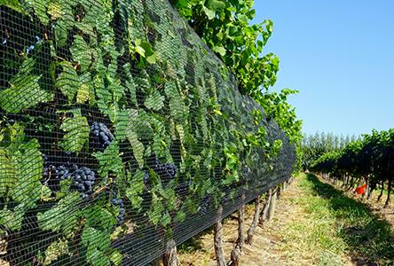 Del Fin Del Mundo 053x Ten Stunning Wineries