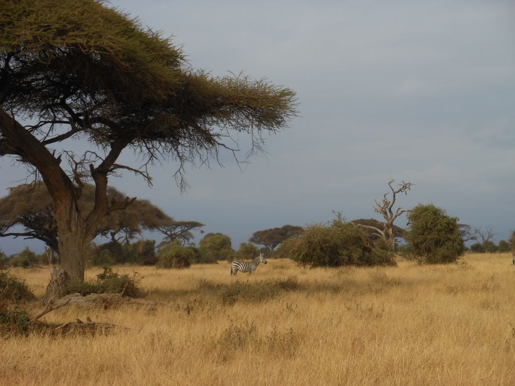 How to do a cheap safari in Kenya
