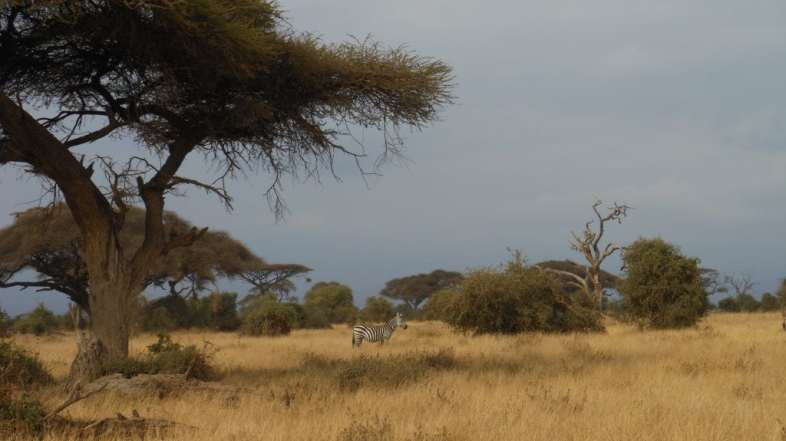 BUDGET BUCKETLIST: How to do a cheap safari in Kenya