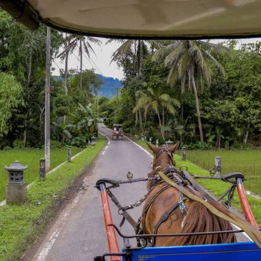 Itinerary for Java, Indonesia: Cities, temples & rice fields