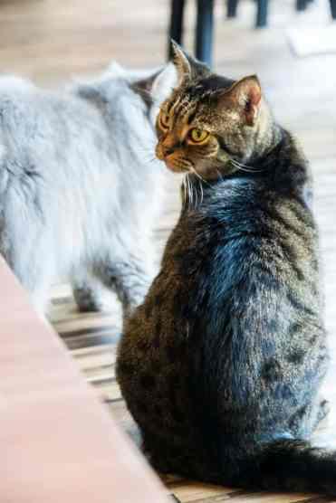 KittyCatCaféBangkok6