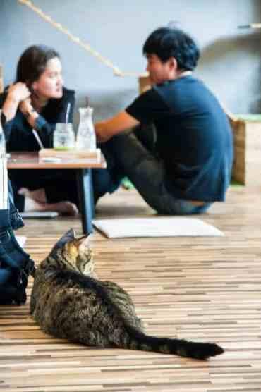 KittyCatCaféBangkok8 - Kitty Cat Café: ik bezocht een echt kattencafé in Bangkok!!! #crazycatlady