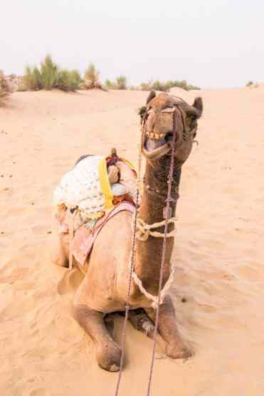 CamelSafariJaisalmer1
