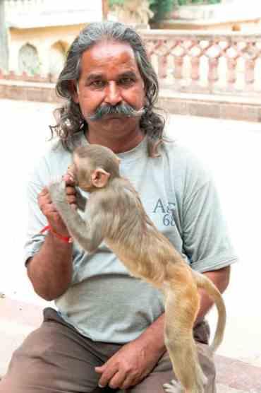 Monkeytemple18 - De monkey temple bezoeken in Jaipur: een aanrader of niet?