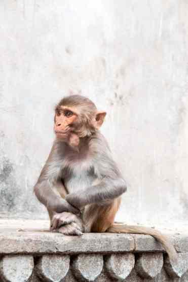 Monkeytemple31 - Deze foto's zorgen ervoor dat India bovenaan je bucketlist komt!