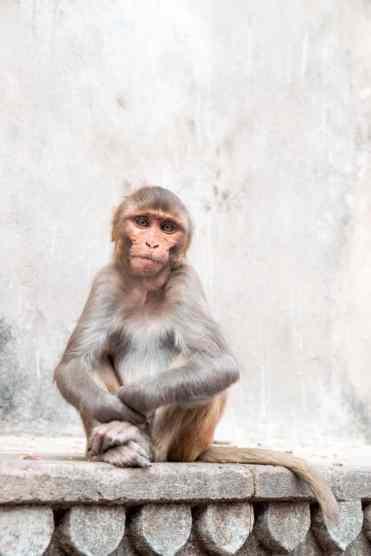 Monkeytemple32 - Jaipur bezienswaardigheden: mijn beste tips voor een bezoekje aan Jaipur