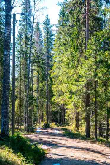 KoliNationalPark35 - Koli National Park in Finland: een Scandinavisch sprookje (dagboekje)