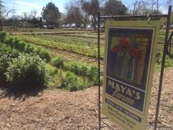 Maya's Farm, The Farm at South Mountain, Phoenix, AZ