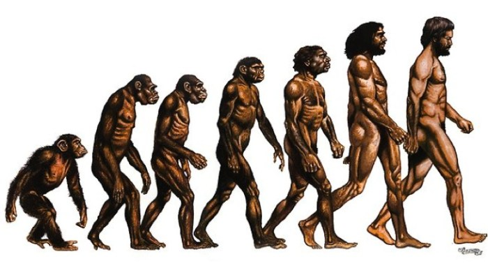 Evolution-Of-Humans