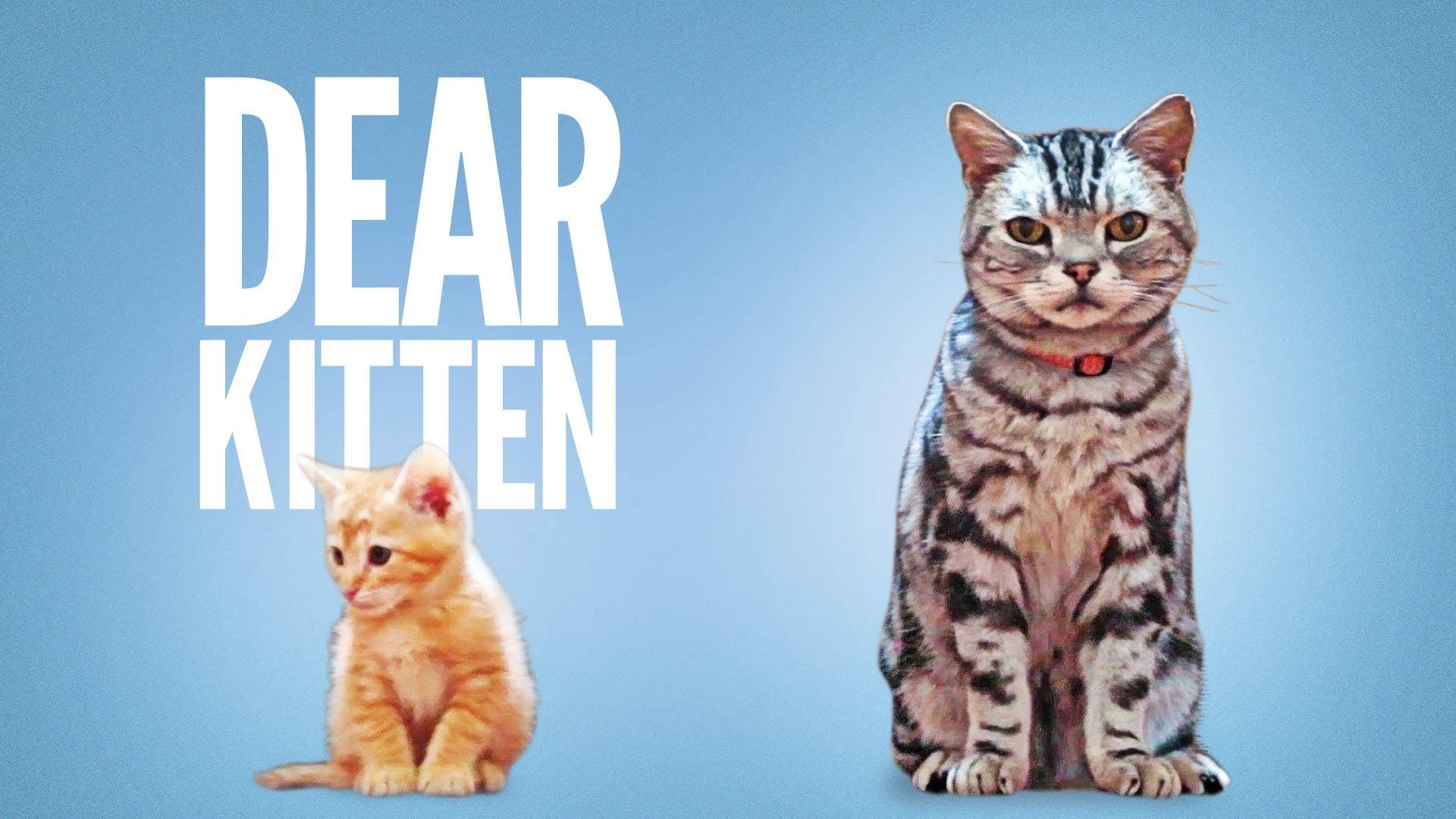 Dear kitten expose media difference entre publicite qui fonctionne ou non