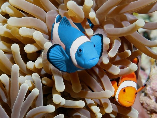 Cutest Animals In The World,clownfish