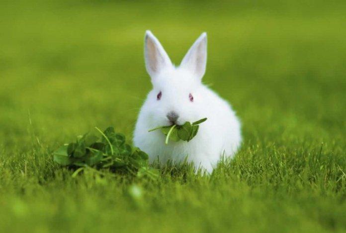 15 most Friendliest Animals In The World,rabbits