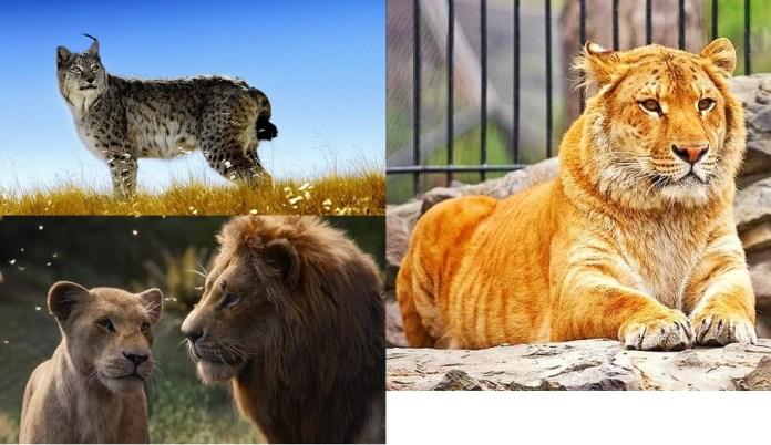 List of Top 20 Best Land Animals