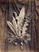 Charles Aubry - Groupe de végétaux sur fond tulle 1864