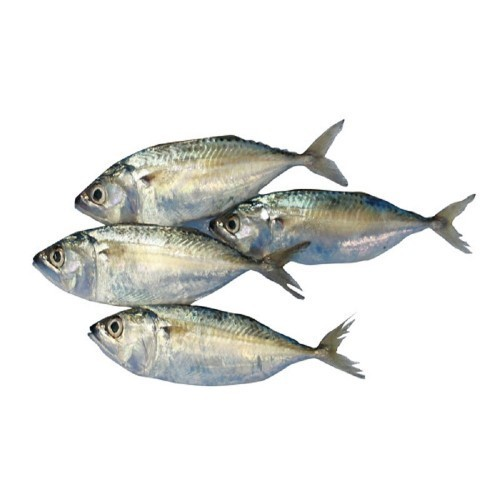 type of fish