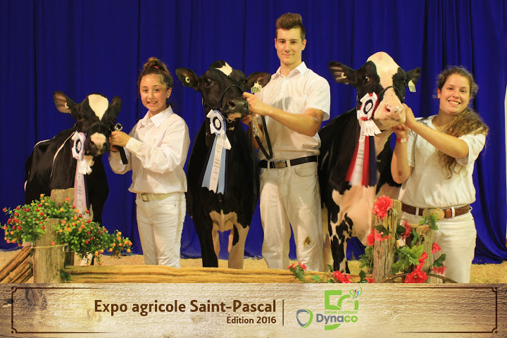 Championnat Holstein