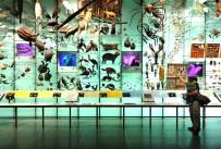 Exibição de pequenos animais e crustáceos.