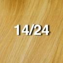 Light Ash Brown/Golden Blond - 14/24