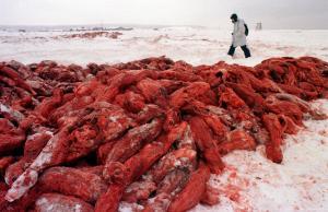 zeehonden gevild