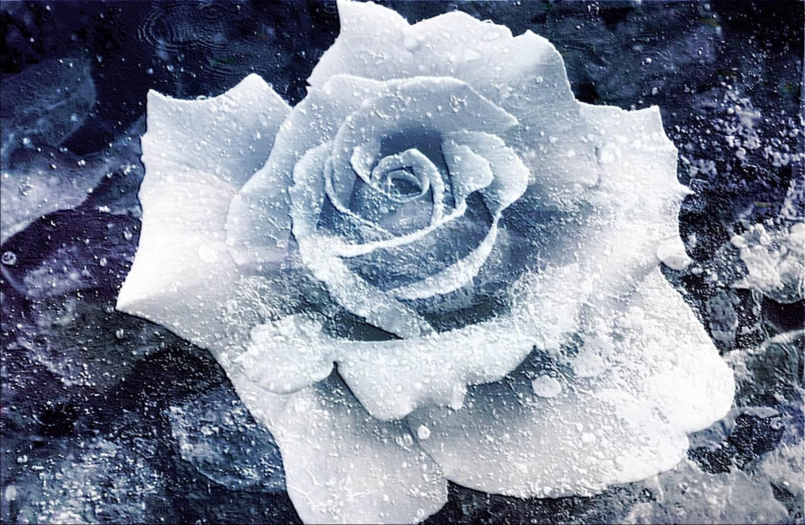 haiku-frozen-flower