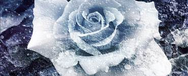 Haiku: a frozen flower   Expressing Life