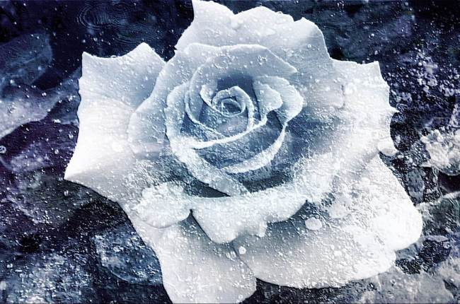 haiku-frozen-flower