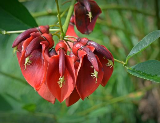 L'élixir floral Andin de Ceibo pour se reconnecter et retrouver l'harmonie