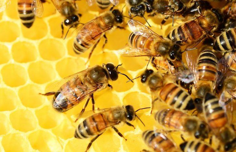Miel de Menorca Exquisita Menorca