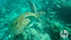 maldives-medres-logo-diving-4