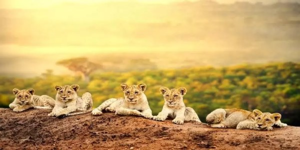 Why You Should Consider African Spots for Your Next Vacation 1