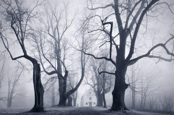Misty Czech Bohemian Forest photo by Kilian Schönberger