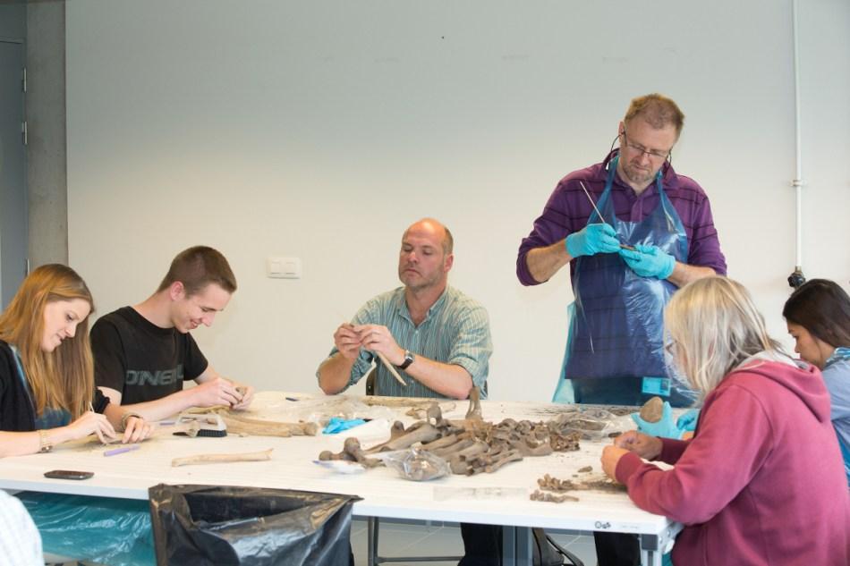Vrijwilligers aan het werk © Geert Vyverman