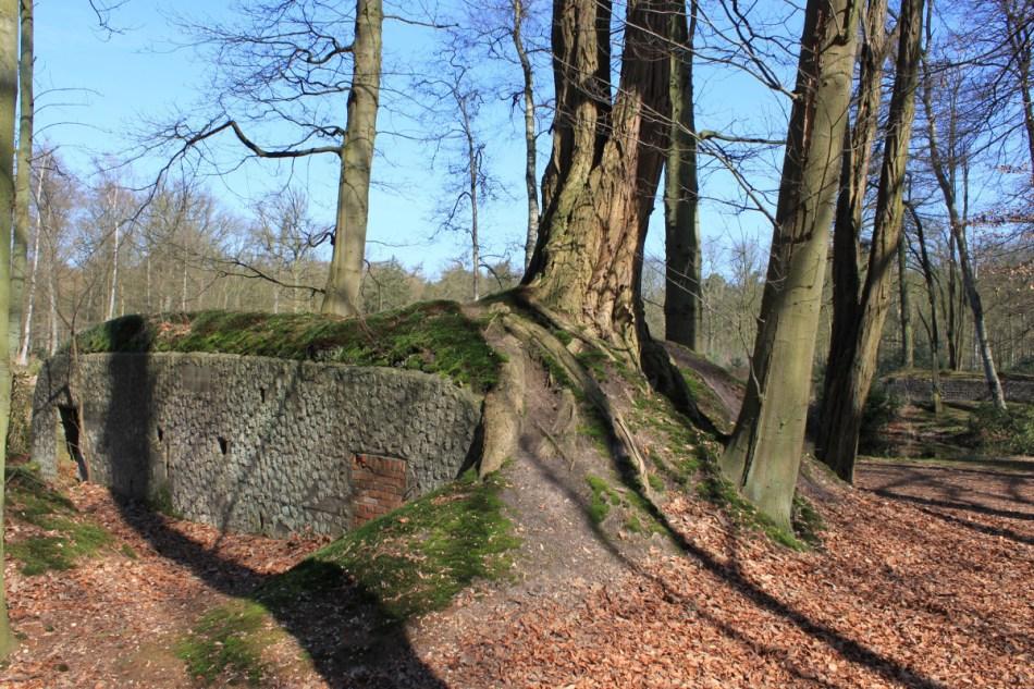 Overwoekerde bunker in het Mastenbos © Wouter Gheyle