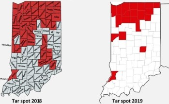 Figure 1. Distribution of tar spot in Indiana in 2018 and current distribution as of Oct 1, 2019.
