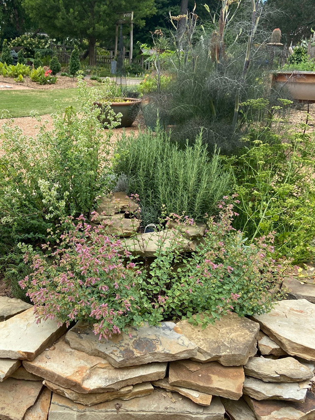 Culinary Herbs For Oklahoma Gardens Culture Use And Preservation Oklahoma State University