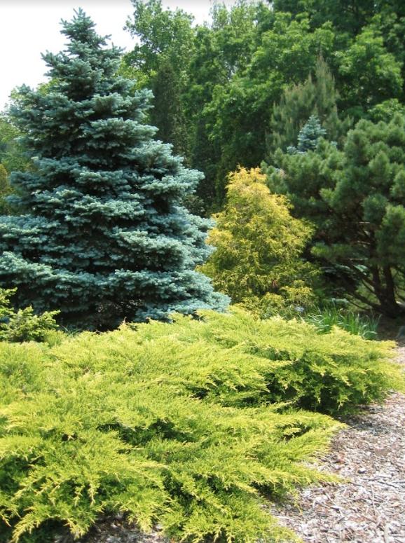 Zone 5 Pond Plants