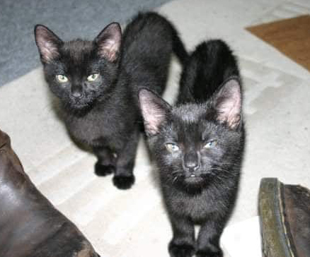 Arthur and Albert as kittens - now together again.