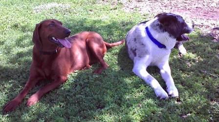 Lucy e Sully estão juntos em todos os momentos