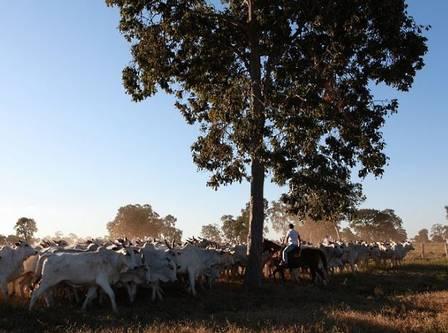 A fazenda de Zezé tem 1.500 hectares e foi avaliada em R$ 25 milhões