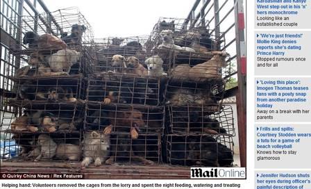 Os animais estavam em um caminhão