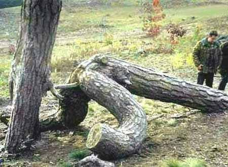 7 Weird X-rated Pictures Of Mother Nature