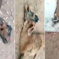 """Misterioso ataque en Santiago del Estero: ¿Otra vez el """"chupacabras""""?"""